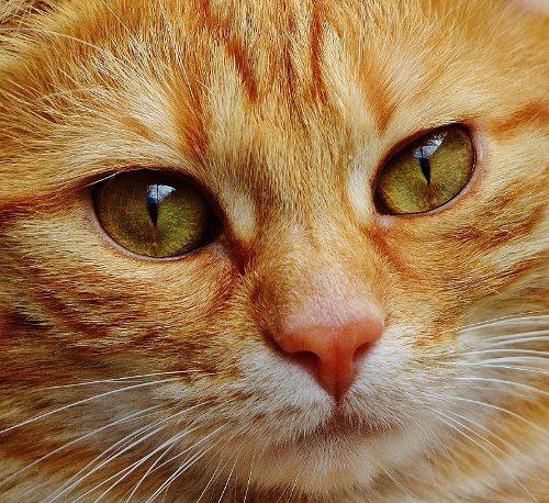 """Il gatto rosso e le tagliatelle. Ricordando Gimmi e la sua """"gita"""" ad Argenta"""