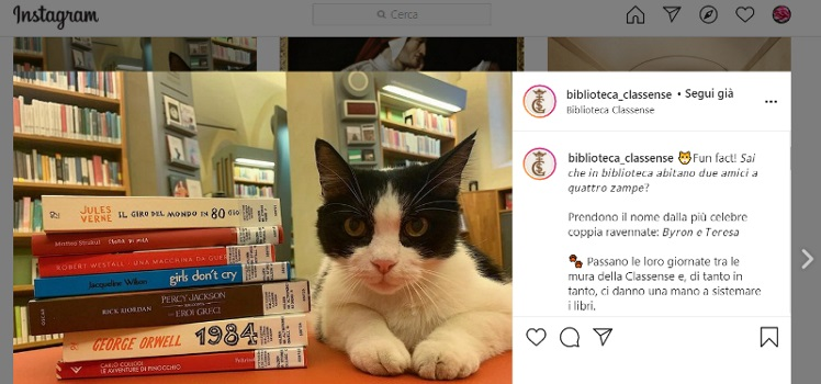 gatti e biblioteche